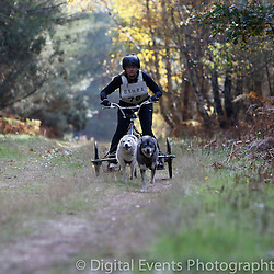 BSHRA Daisy Walk Rendlesham Nov 2016