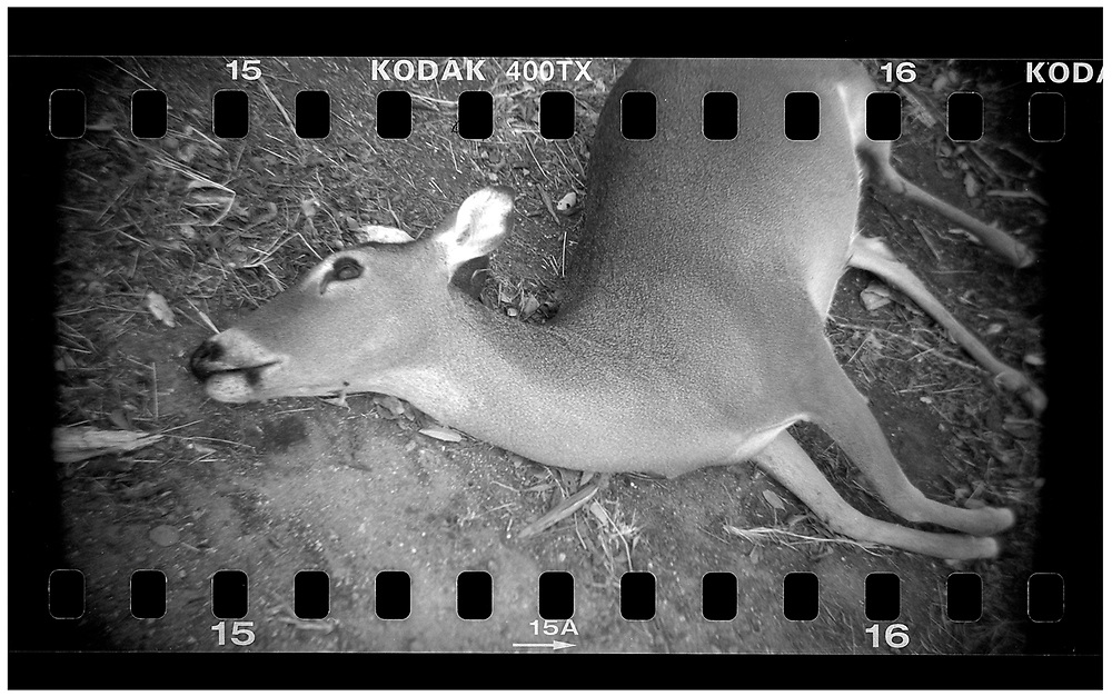 A dead deer lays in a ditch beside a road in Crawford, Texas, December 13, 2008. U.S. President George W. Bush moved to the small Texas town, population 705, in 1999 during his run for the presidency in 2000. The effect of the image was achieved by shooting 35mm black and white film in a medium format camera thereby exposing the entire negative including the sprocket holes of the film. REUTERS/Jim Young