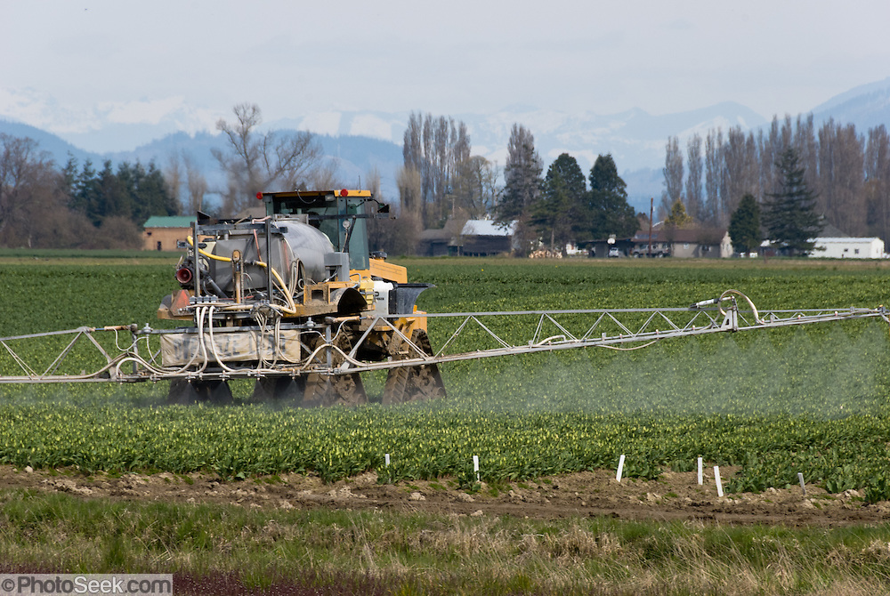 A farm machine sprays a crop of tulips in the Skagit River Delta, beneath the snowcapped North Cascade Mountains in Washington, USA
