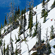 David Steele skiing a barbie line in Glacier National Park.