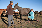 Rosa and her husband live in a yurt on the jailoo (high altitude pasture) in summer around Son Köl lake, Kyrgyzstan. She milks their mares twice a day. Fermented mare's milk, known as kumis, is widely drunk across the Central Asian steppes in summer.