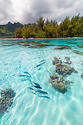 Motu Fareone, Tiahura, Moorea, French Polynesia