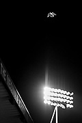 Editors Note: This image has been converted to Black & White.  Bird flying over the floodlights of the Medway Stand during the EFL Sky Bet League 1 match between Gillingham and Lincoln City at the MEMS Priestfield Stadium, Gillingham, England on 16 November 2019.