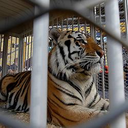 10-22-2011 Auburn at LSU