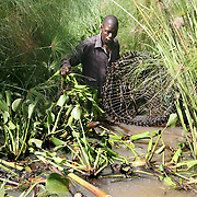 Fisherman Carilus Odera, 45, uses traps, to catch mud fish. Mud fish, used for bait, have appeared in Lake Victoria for the first time because of the water hyacinth infestation. Pollution of the lake is causing water hyacinth to grow out of control and is a sign of the environmental problems affecting the lake.