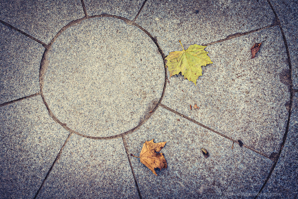 leaves in a circle on the ground