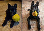 Before-And-After Photos Of Pets Growing Up With Their Toys