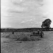 Saving hay at Dunmore, Co. Kilkenny. 05/07/1953