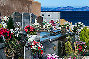 Cemetery with fresh flowers,  St Tropez, France