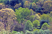 PA landscapes, spring trees, Tuscarora State Forest