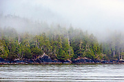 Coastal Rainforest in Tofino, British Columbia, Canada