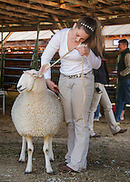 Boarder Leicester Yearly Ewe, Ila, gets a last minute touchup by Iris LaRochelle before the Sheep fit and show Monday morning at the Sandwich Fair.  (Karen Bobotas/for the Laconia Daily Sun)