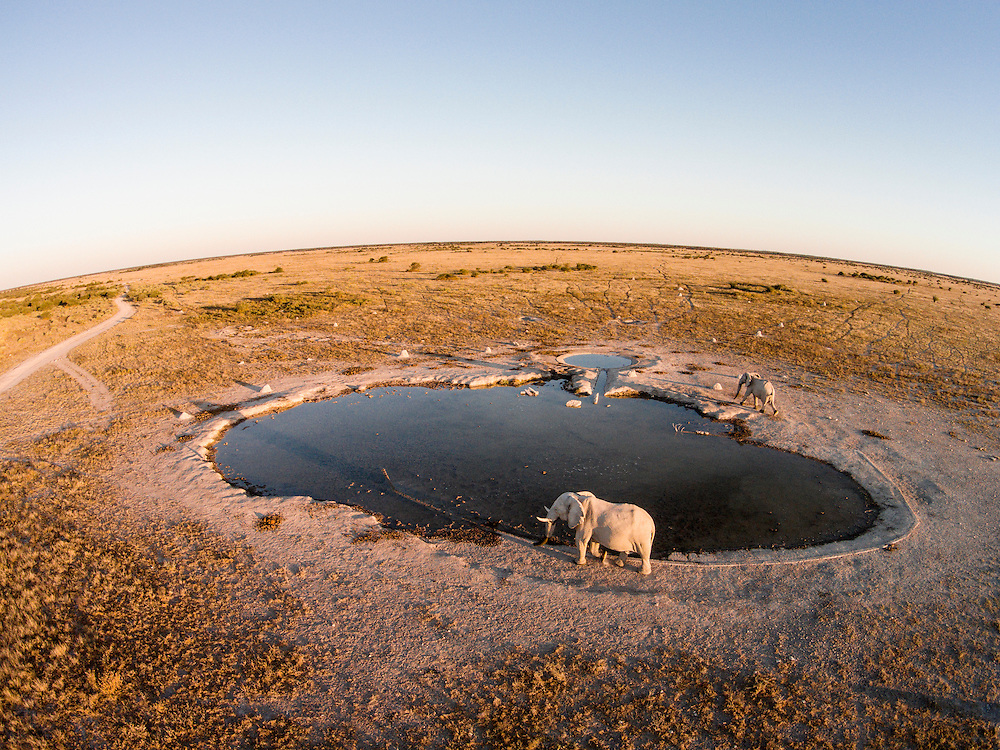Africa, Botswana, Nxai Pan National Park, Aerial view of Bull Elephants (Loxodonta africana) at artificial water hole in Kalahari Desert at sunset