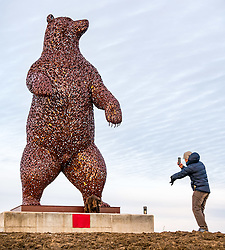 Dunbar, East Lothian, Scotland, United Kingdom, 19 November 2019. Andy Scott statue unveiling: Unveiling today of a 5m high bear sculpture to celebrate the life of naturalist John Muir. The sculpture by the Kelpies creator Andy Scott marks Dunbar-born John Muir who played a key role in the development of national parks in the US. Local man, Davy takes a photo of the giant bear sculpture before going to work this morning.<br /> Sally Anderson | EdinburghElitemedia.co.uk