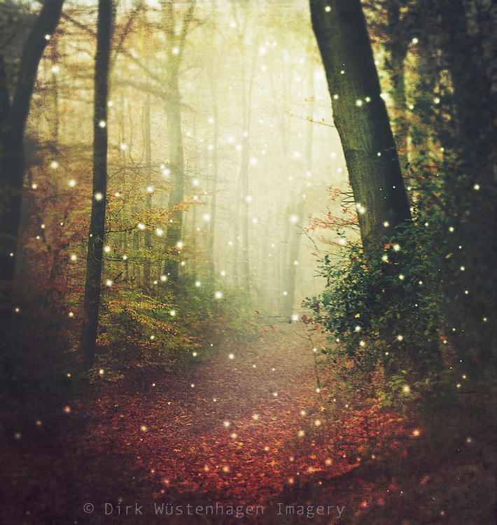 Dreamy surreal forest scenery on a misty fall morning - manipulated and textured photograph<br />