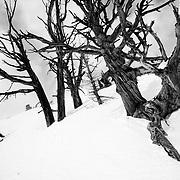 Luke Perin grabs some late season powder in the Tetons near Jackson Hole Mountain Resort.