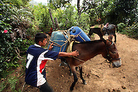 A man prepares to take mules carrying gasoline, to be used in the production of coca paste, to a lab in a remote area of the southern Colombian state of Nariño, on Monday, June 25, 2007. (Photo/Scott Dalton)