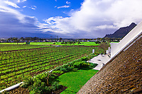 Vineyards, Steenberg Hotel & Winery, Constantia Valley (near Cape Town), South Africa