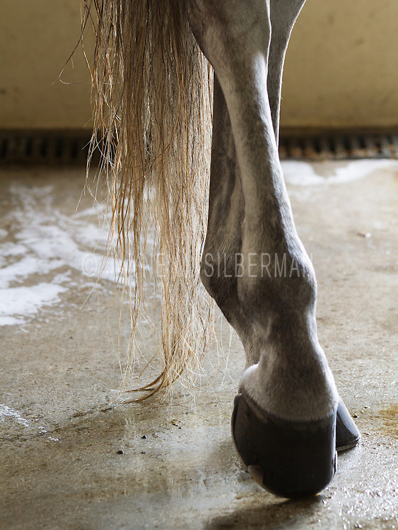 Detail of a horse's legs at rest in a wash stall after a shampoo and rinse.