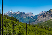 After 50 years, new forest grows from slopes ravaged by the 1968 Vermilion Pass Burn along the Stanley Glacier Trail, in Kootenay National Park, British Columbia, Canada. The Rockwall rises on the horizon.