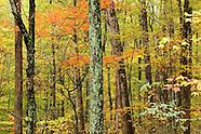 Bernheim Arboretum & Research Forest Photos