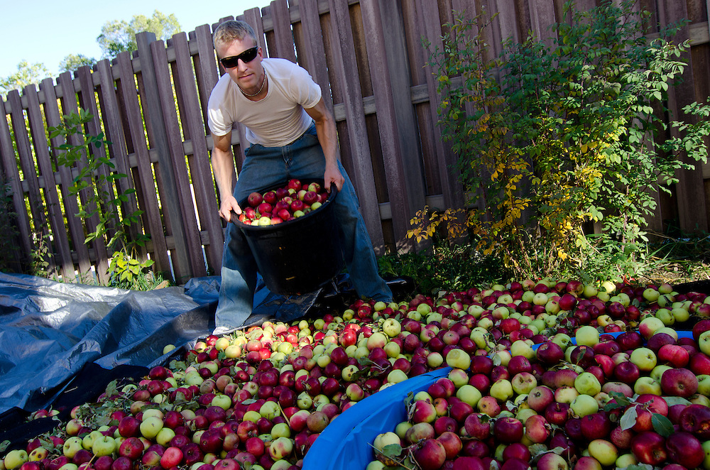 Andy Farley enjoys the autumn tradion of apple cidar pressing, Durango, CO.