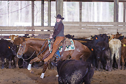 April 30 2017 - Minshall Farm Cutting 2, held at Minshall Farms, Hillsburgh Ontario. The event was put on by the Ontario Cutting Horse Association. Riding in the 35,000 Non-Pro Class is Laurie Reed on Easy Smith owned by the rider.