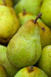 Pear 'Williams' Bon Chretien' - Pyrus