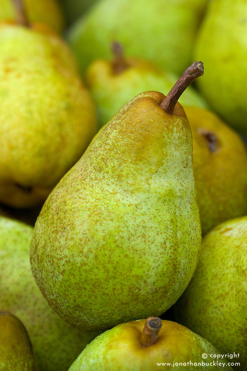 Pear 'Williams' Bon Chretien' - Pyrus