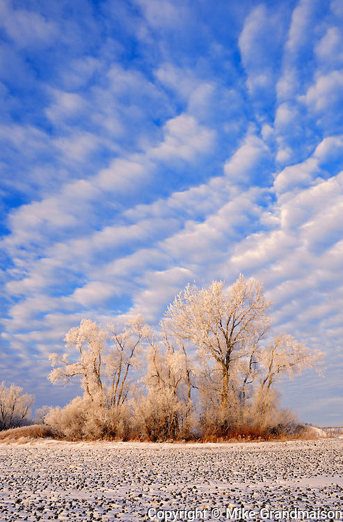 Hoarfrost on trees and farmer's field<br />Starbuck<br />Manitoba<br />Canada