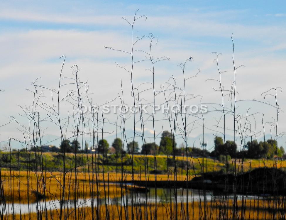 Scenic Landscape Of Newport Beach Back Bay