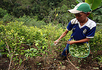 An eleven-year-old boy picks coca in a remote area of the southern Colombian state of Nariño, on Monday, June 25, 2007. Although government efforts to eradicate coca have reached many parts of Colombia, still the coca business thrives. (Photo/Scott Dalton)