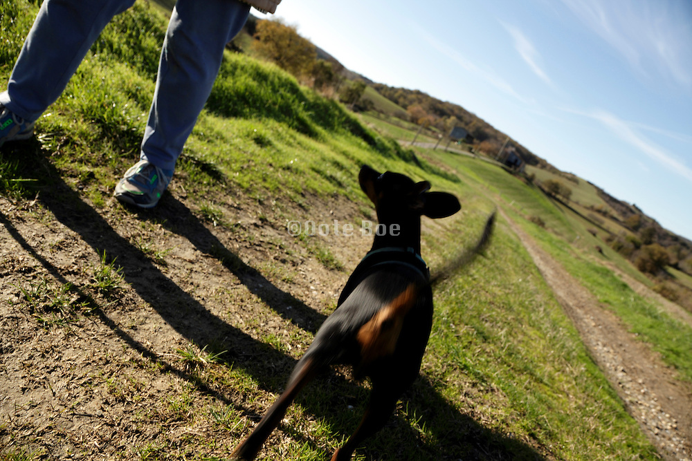 person walking with dog in rural landscape