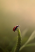 A macro shot of a ladybug