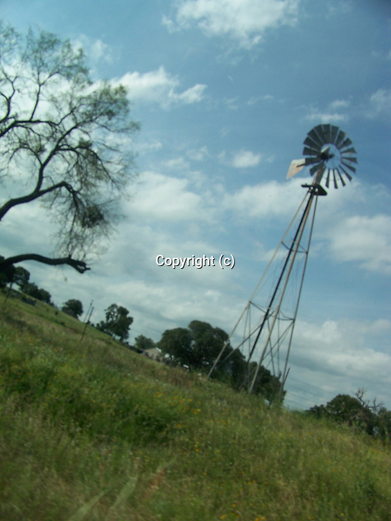 Windmill and Mesquite tree, country scene along Hwy. 6 in Texas