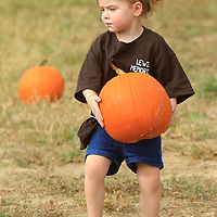 Kyndall Parker, 3, of Calhoun City and a student at the Lewis Memorial Daycare, carries a pumpkin she picked out to keep during her visit to the Buffalo Park and Zoo on Monday afternoon in Tupelo.