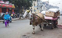 DELHI - Ossewagen in de straat van Old Delhi.ANP KOEN SUYK