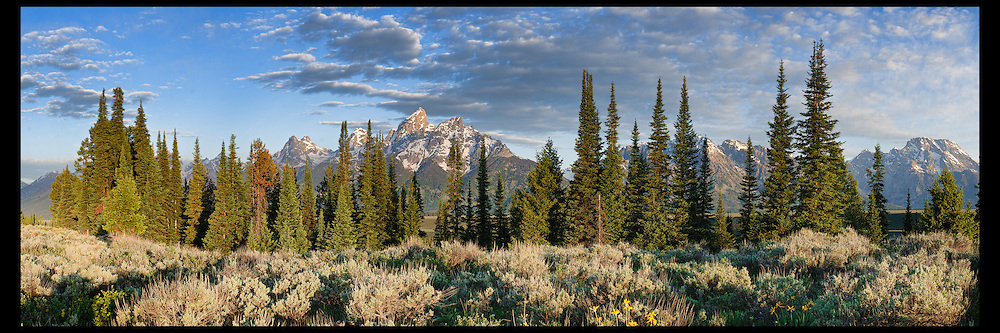 A stand of spruce trees in front of the Grand Teton mountain range in Grand Teton National Park.