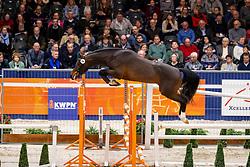 068, Lornet Balou E<br /> KWPN Hengstenkeuring - 's Hertogenbosch 2019<br /> © Hippo Foto - Dirk Caremans<br /> 30/01/2019