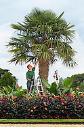 EH Osborne Palm