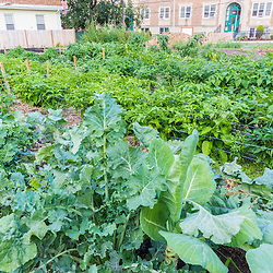Kale, collard greens, and peppers growing at the Garrison-Trotter Farm in the Dorchester neighborhood of Boston, Massachusetts.