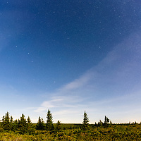 Big and Little Dipper high above Dolly Sods, with flowering mountain laurel bushes