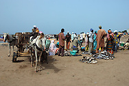 M'bour, Senegal.  Landed fish being traded on the beach.  Horse drawn carts carry ice blocks down to the boats from nearby trucks.  Fishermen load pirogues (wooden canoes) with bait,  ice and fuel. These small pirougues will spend days at sea, ten or twenty miles offshore in the Atlantic.  M'bour is one of the most important fishing ports in Senegal.