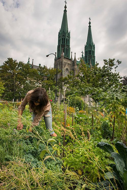 Jardin communautaire de La Mennais, rue Beaubien Est et Drolet, arrondissement Rosemont-La Petite-Patrie, Montréal, Québec