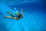 Woman plunges into tropical clear blue waters, into a lagoon in Vava'u.  Tonga. To use this image please contact Getty Images. Getty #200027698-001