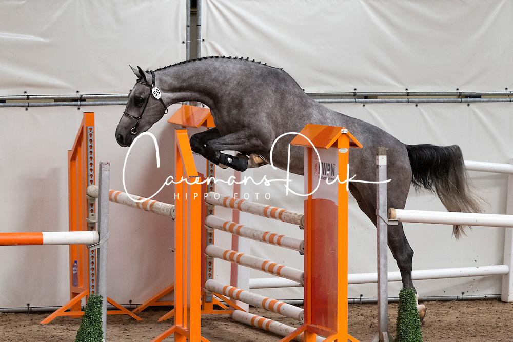 059 - Eastbourne<br /> KWPN Paardendagen - Ermelo 2012<br /> © Dirk Caremans