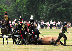 © licensed to London News Pictures. LOCATION, UK  02/06/2011. Soldiers attend to a horse that was injured during the Queen's Gun Salute in Hyde Park. Please see special instructions for usage rates. Photo credit should read MARY STAMM-CLARKE/LNP