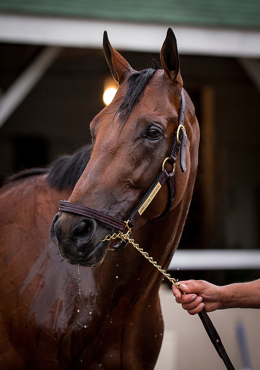 April 30, 2015: American Pharoah iat Churchill Downs Louisville Ky. Alex Evers/ESW/CSM