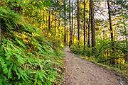 Oneonta Falls Trail, Columbia River Gorge, Oregon.