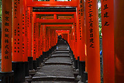 Japan, Kyoto, Red Tori Gate at Fushimi Inari Taisha is the head shrine of the god Inari, located in Fushimi Ward in Kyoto, Japan. The shrine sits at the base of a mountain also named Inari which is 233 metres (764 ft) above sea level, and includes trails up the mountain to many smaller shrines which span 4 kilometres (2.5 mi) and take approximately 2 hours to walk up. First and foremost, Inari is the god of rice, but merchants and manufacturers have traditionally worshiped Inari as the patron of business. Each of the torii at Fushimi Inari Taisha has been donated by a Japanese business.